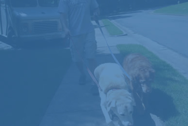Dog Walking Services Alexandria VA